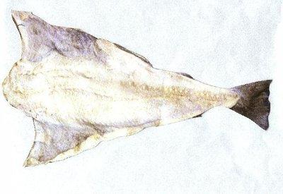 Klipvis / bacalao